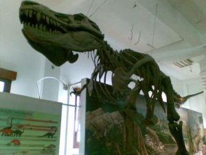 T Rex di Museum Geologi