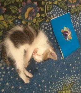 Ageung lagi tidur dekat buku mewarnai. Biasanya  dia lebih suka naik ke pangkuan buat tidur.