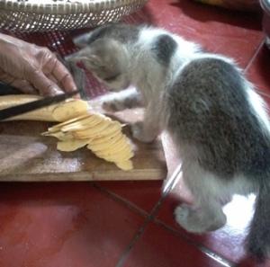 Hobi banget ikut-ikutan sibuk masak atau bersihin rumah (nyapu/ngepel lantai). Tapi kalau masak sih mesti disingkirkan dulu.